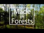 """""""Made in Forests""""  –  a short story about sustainable fashion with Mich…"""